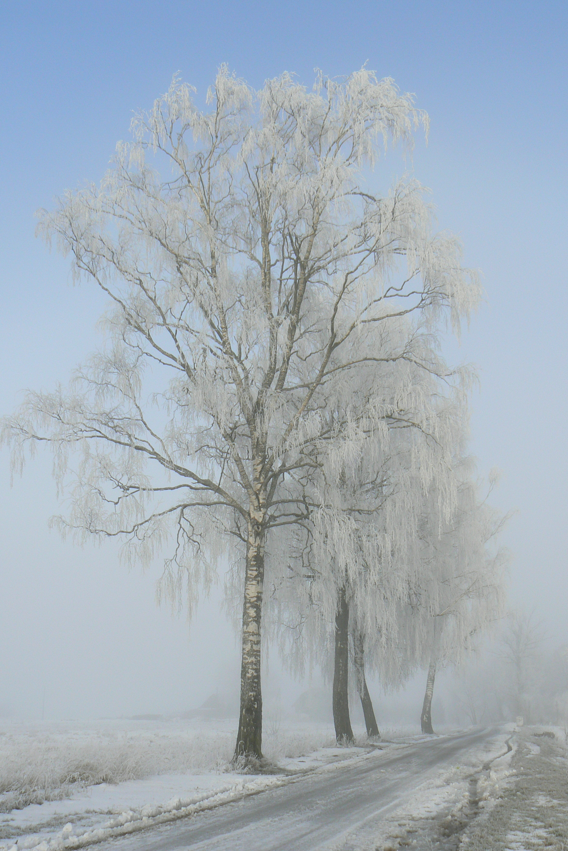Šilgaliai, Lithuania